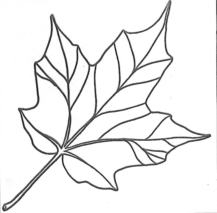 leaf coloring page 5