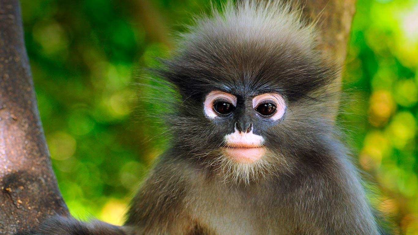 Images of Monkeys Wallpaper 6
