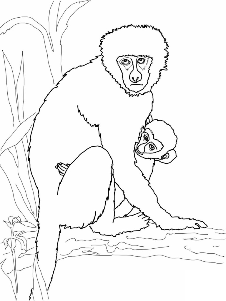 Coloring Pages of Monkeys 3