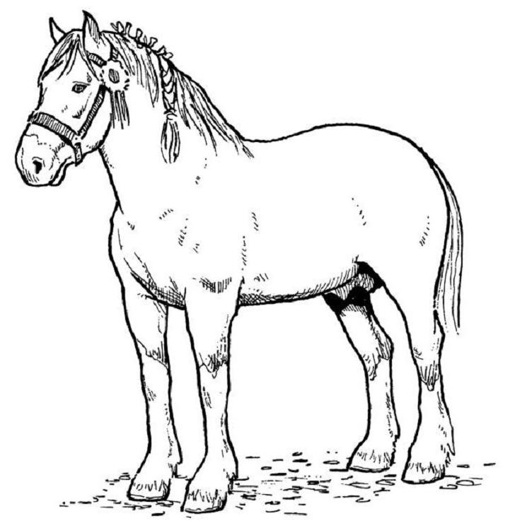 Horse Color Pictures Free