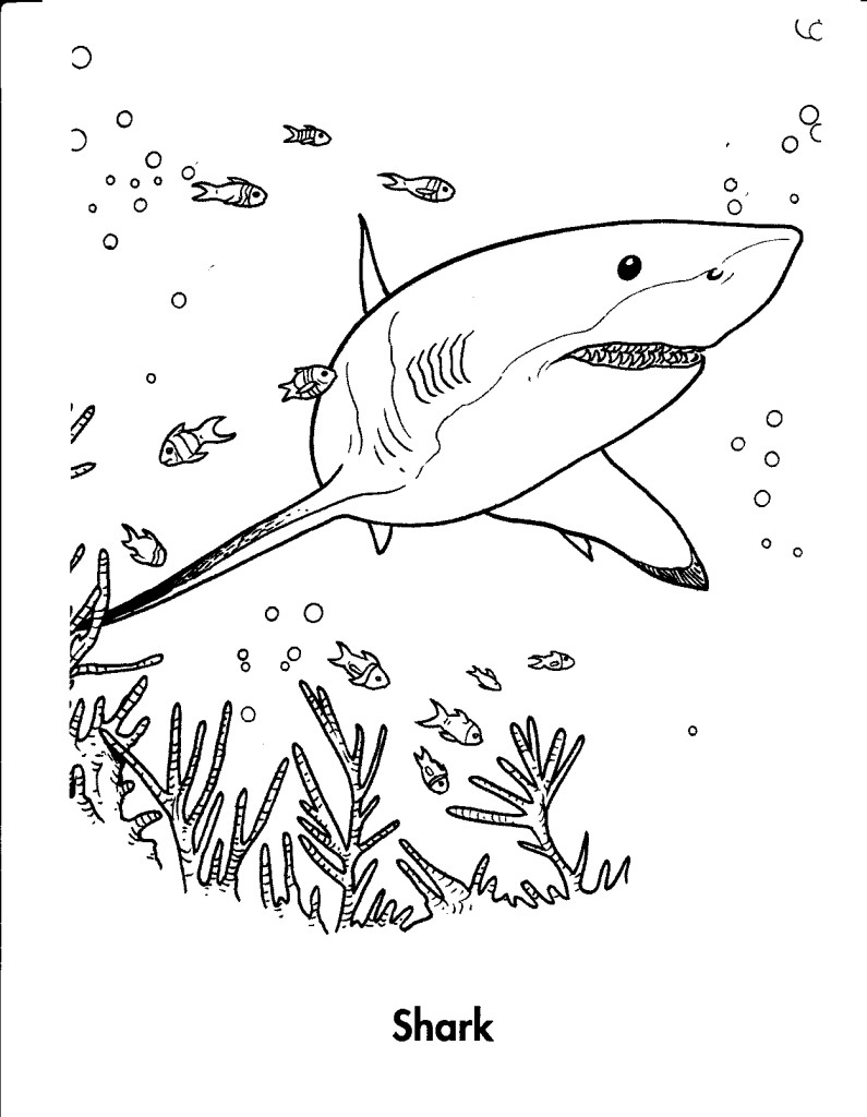 Shark Color Pages for Kids