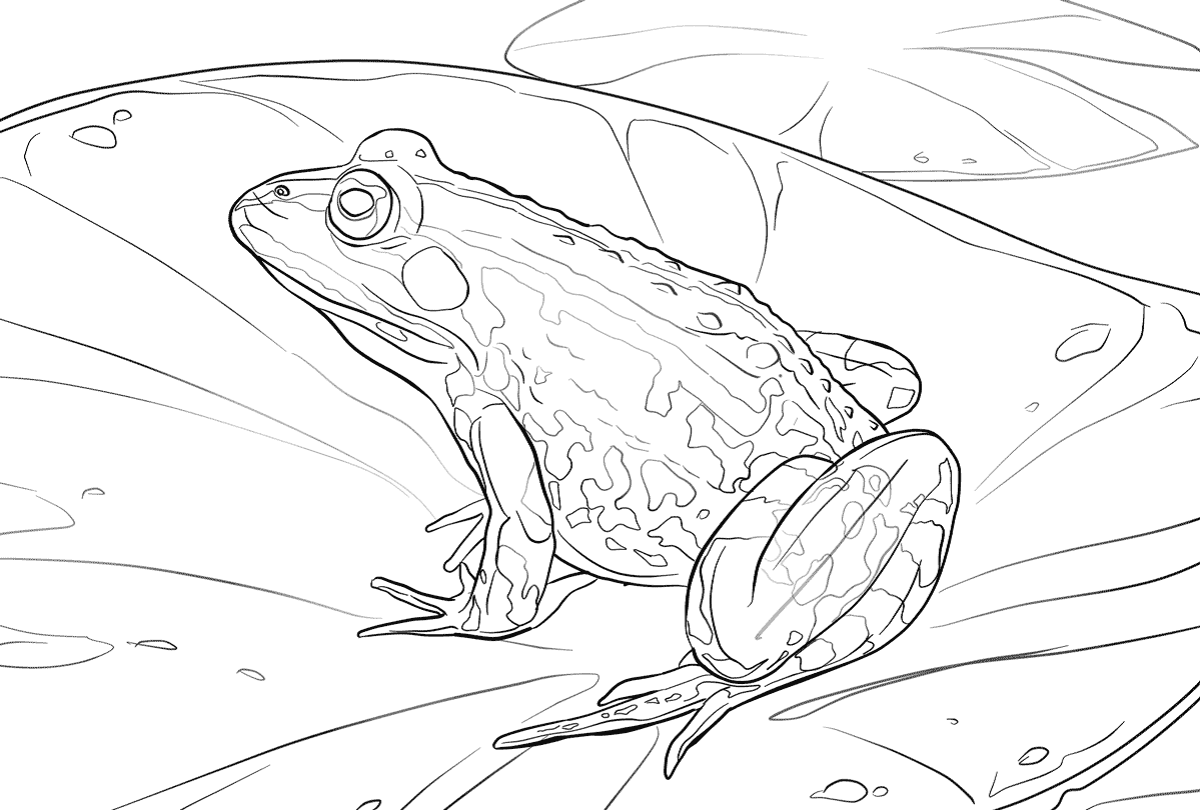 frog color pages in water